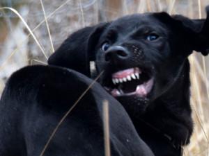 Vzteklý pes napadal bezbranné turisty.