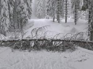 Stromy padají i v Jizerkách a ohrožují tak lyžaře