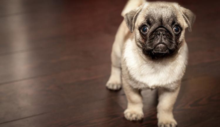 PRŮZKUM: Češi za svého psa utratí v průměru téměř 16 tisíc za rok