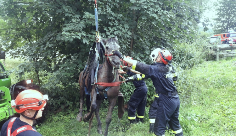 FOTO: Hasiči zachraňovali kobylu, která uvízla v bahně