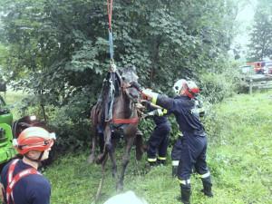 Hasiči zachraňovali kobylu pomocí speciální sítě.