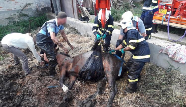 FOTO: Kůň zapadl do jímky plné bahna. Hasiči ho vytáhli jeřábem