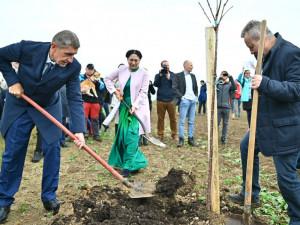 Andrej Babiš sází stromy ve Vyskeři