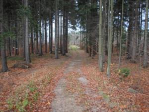 Silnice nemá vést po této cestě, ale víc vlevo lesem