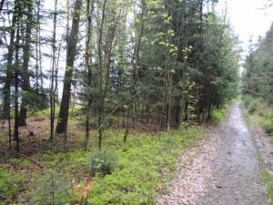 6. Zarostlé dálniční těleso směrem ke Spáleništi. Vpravo les.